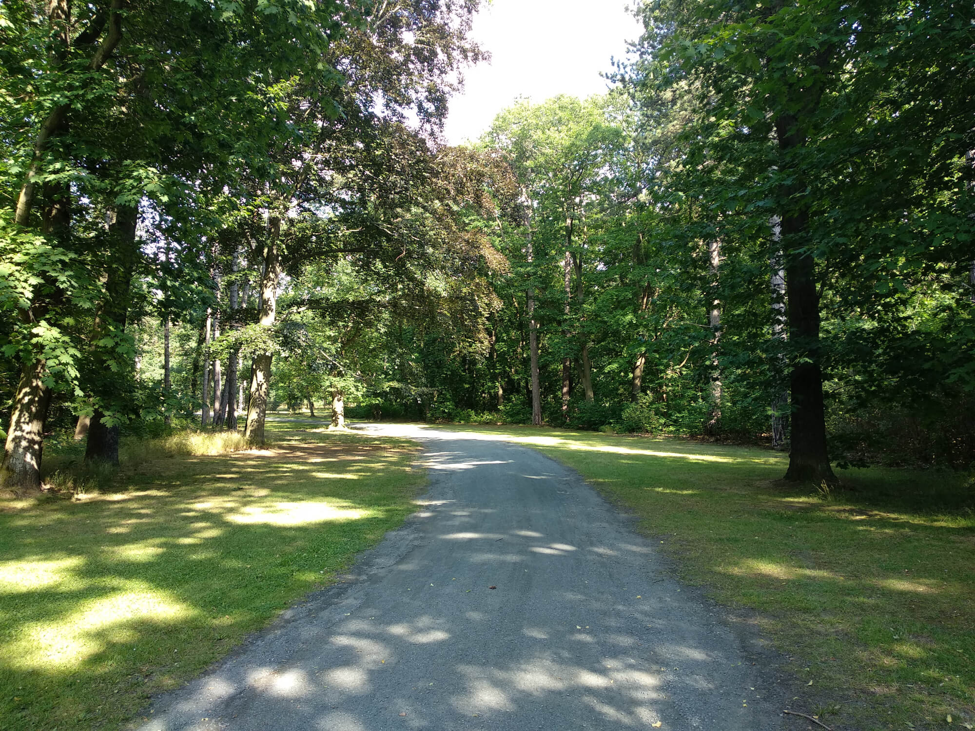 A path through the park