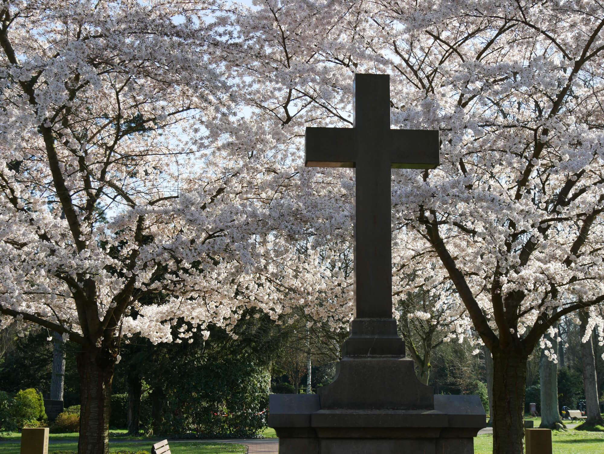 Gravestone in front of flowering trees