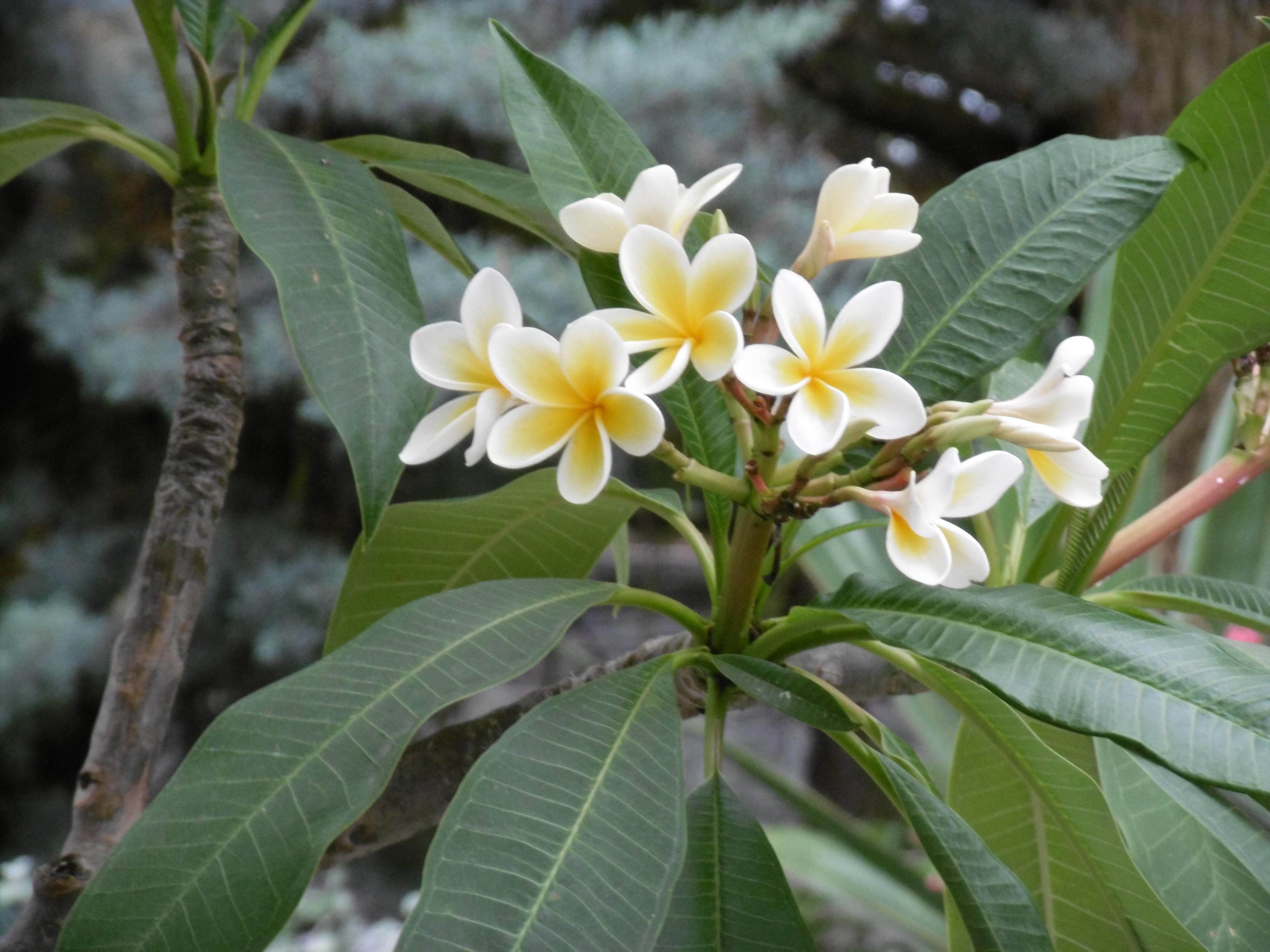 Ein schönes Titelbild: Eine Blume