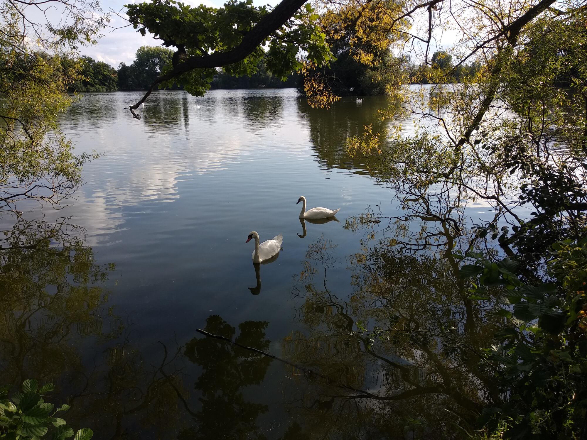 Schwäne auf einem See