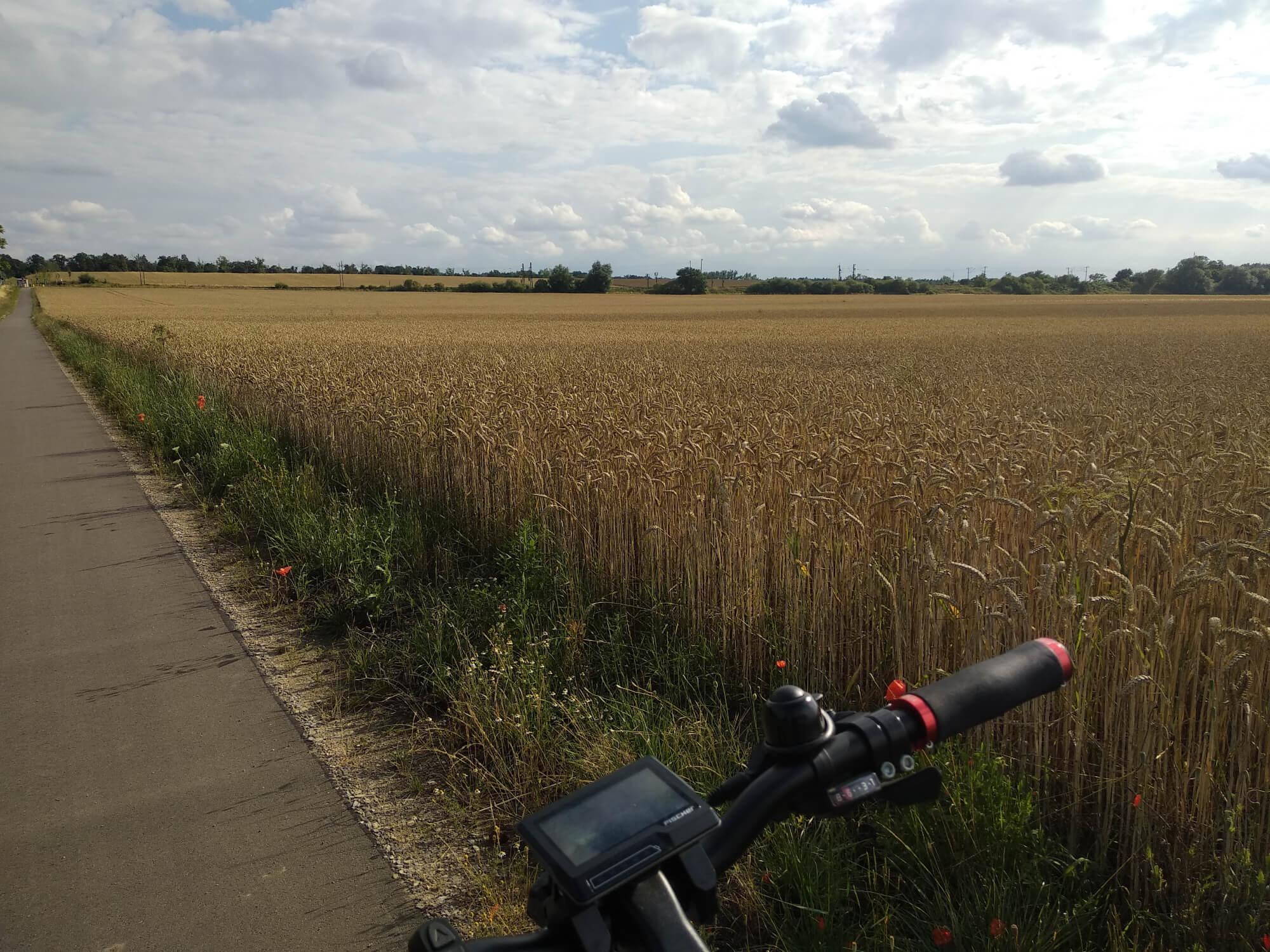 Im Vordergrund mein Fahrradlenker, dahinter ein Feld